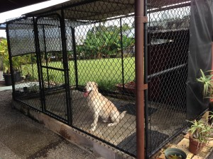 G. Navarro dog kennel